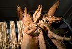 crocodiles écorchés trafic animaux