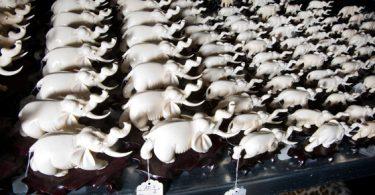 éléphant ivoire trafic animaux