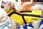 coyotevest armure pour chien
