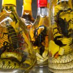 Scorpions bouteille trafic animaux