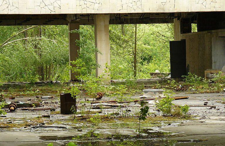 Extinction humanité biodiversité