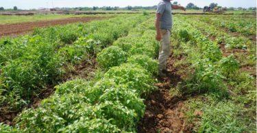 Agrihood Texas communauté écologique