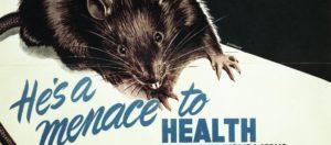 Rats mélange espèces Ville
