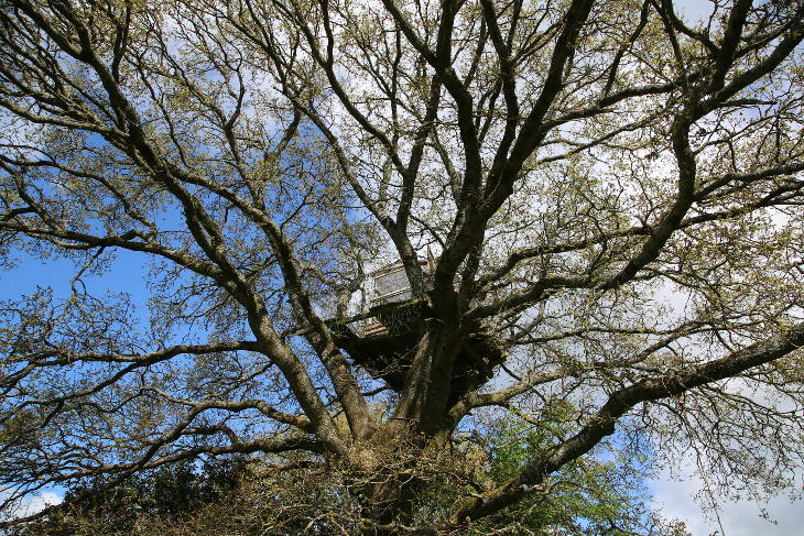 ZAD cabane dans les arbres