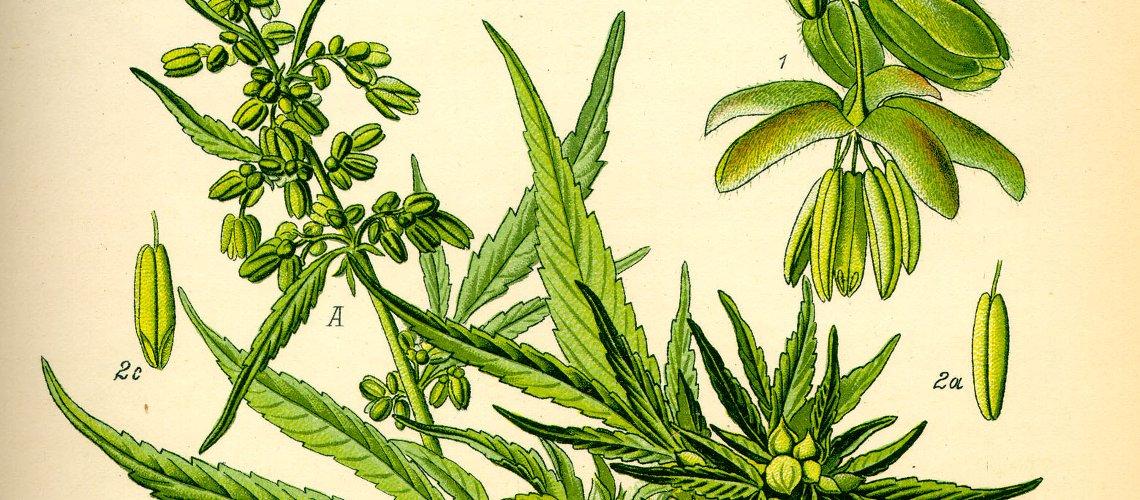 Investir cannabis bourse actions