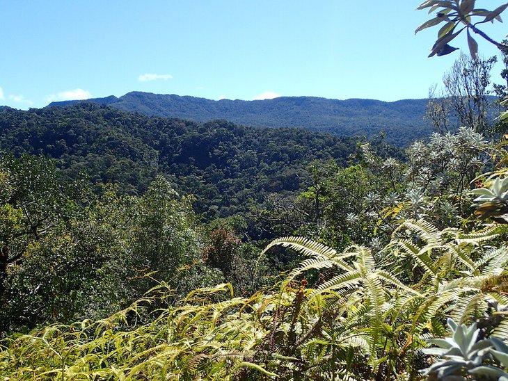 Tsaratanana Forêt Madagascar Trek