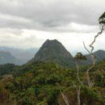La forêt de Tsaratanana à Madagascar